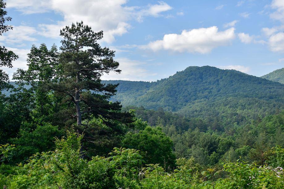 nc arboretum mountains
